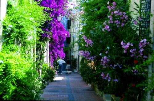 Rivieran kauniit puutarhat Nizza