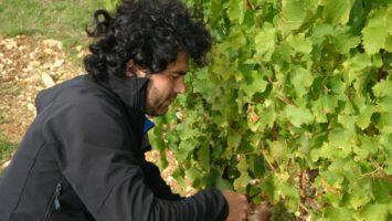 Viininpoiminta alkanut Ranskassa