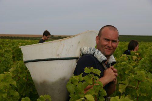 Viininpoimija Loiressa