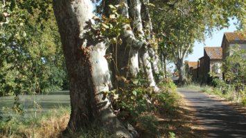Pyöräretki Canal du Midi on ulkoilua parhaimmillaan