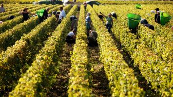 Hemmotteleva Bordeaux suorilla lennoilla